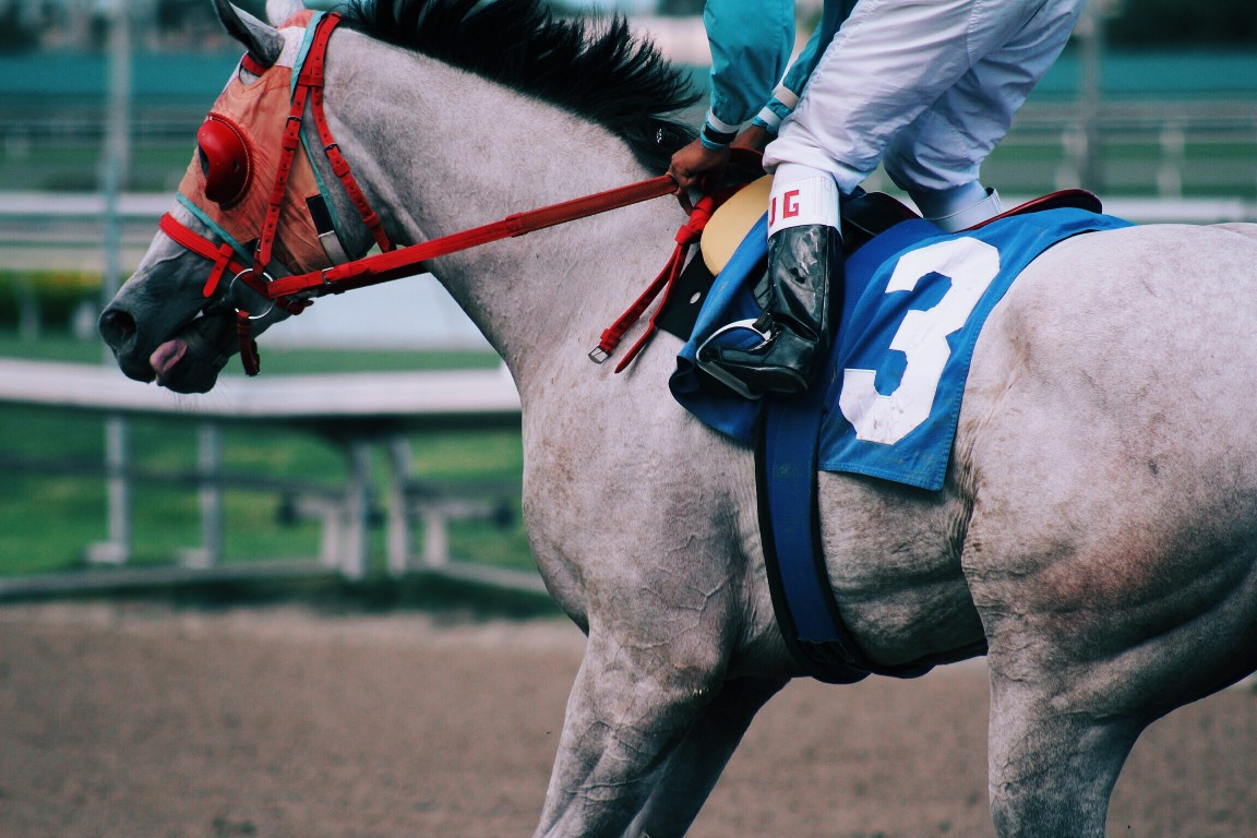 Jockey et cheval