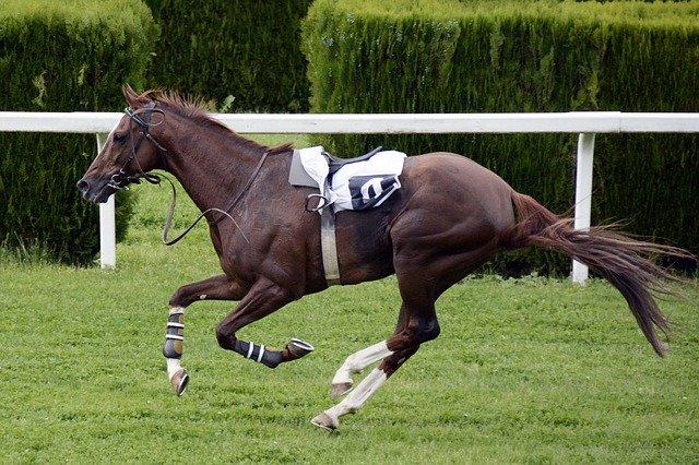 horse-racing-1577291_640